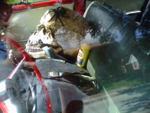 skull with spider and brake fluid