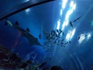 Georgia Aquarium #2