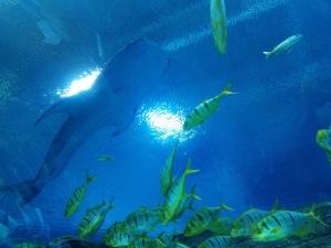 Georgia Aquarium #1