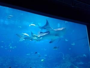 Georgia Aquarium #3